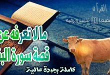قصة البقرة المذكورة في القرآن في سورة البقرة