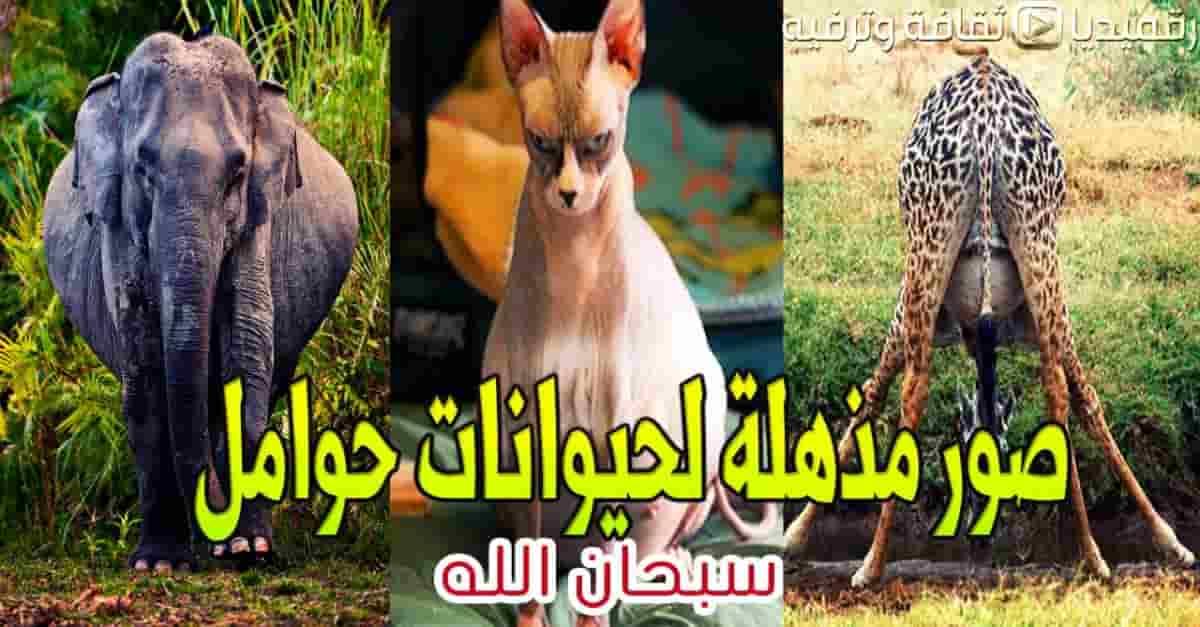 صور-مذهلة-لحيوانات-حوامل-سبحان-الله