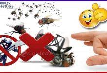 أسهل-طريقة-لطرد-الذباب-والناموس-من-المنزل