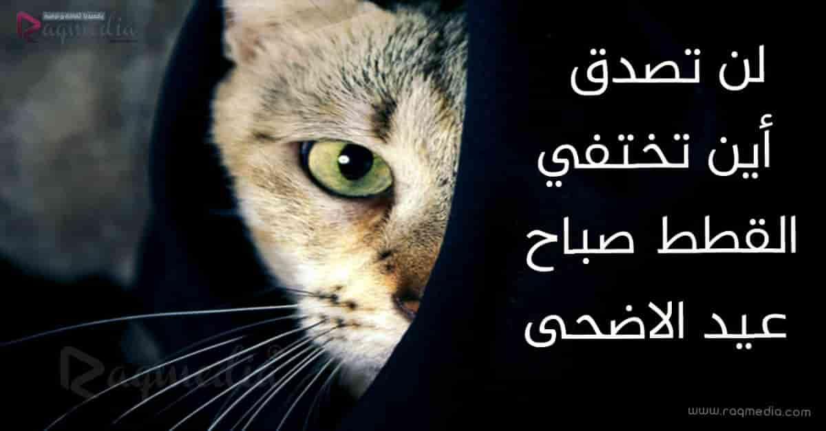 أين-تختفي-القطط-صباح-عيد-الاضحى
