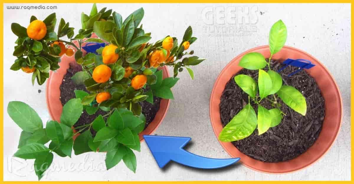 افكار-للعناية-بالنباتات
